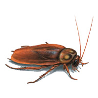 Cockroach Control Lacey WA