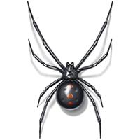 Black Widow Spider Control Lacey WA