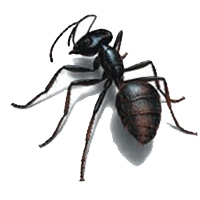 Carpenter Ant Control Lacey WA